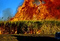 CSIRO ScienceImage 1559 Fire in sugar cane.jpg