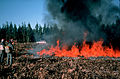 CSIRO ScienceImage 715 Burning Plantation Harvest Residues.jpg