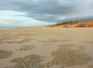 English: Cable Beach, Broome. Taken Before sunset.
