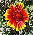 Cactus Garden, Living Desert 3-15m (16549720967).jpg