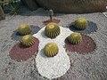Cactus plants.jpg