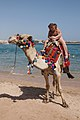 Camel on the beach 5.jpg