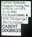 Camponotus obscuripes casent0008633 label 1.jpg
