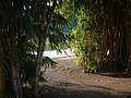 Canebrakes - panoramio.jpg
