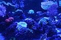 Capetown - Two Oceans Aquarium IMG 9432.JPG