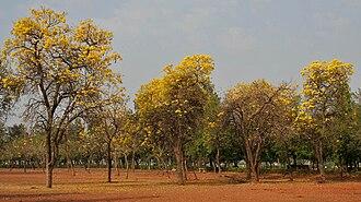 Hussain Sagar - Sanjeevaiah Park
