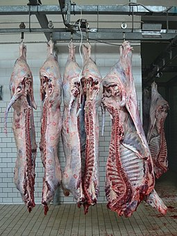 Sides of beef in a slaughterhouse Carni bovine macellate.JPG