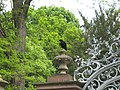 Carrion Crow, Karlsruhe, Germany (1).jpg