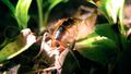 Cave cricket 3 (6010975182).png