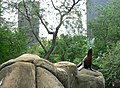 Central Park Zoo NYC2.jpg