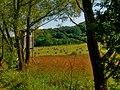 Cestou k rybníku - panoramio.jpg