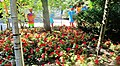 Chinese Garden Montreal Botanical Garden - panoramio.jpg
