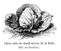 Chou cœur-de-bœuf moyen de la Halle Vilmorin-Andrieux 1904.png