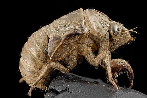 Cicada, shell, upper marlboro, md 2014-07-10-19.57.12 ZS PMax
