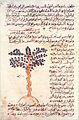 Cinnamomum tree in a 10th century Arabic manuscript.jpg