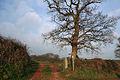 Colebrooke, the Two Moors Way - geograph.org.uk - 330566.jpg