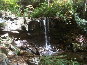 Forbes State Forest - Cole Run Falls is located in an isolated unit of the reserve.