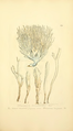 Coloured Figures of English Fungi or Mushrooms - t. 278.png