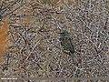 Common Starling (Sturnus vulgaris) (23674267056).jpg