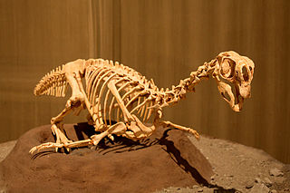 <i>Conchoraptor</i> Extinct genus of dinosaurs