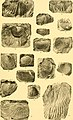 Contribution à la carte géologique de l'Indo-Chine. Paléontologie (1908) (20659197836).jpg