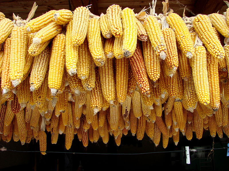 File:Corn for Sale - Sapanta - Romania.jpg