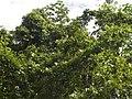 Costa Rica (6110119836).jpg