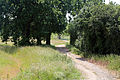Country path with trees at Woodland Trust wood Theydon Bois Essex England.JPG