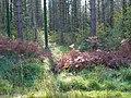 Creech Woods - geograph.org.uk - 1023910.jpg