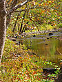 Creek-crane-bird-wv-fall - West Virginia - ForestWander.jpg