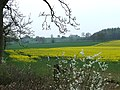 Crop Fields and Woods by Compton Hall Farm, Staffordshire - geograph.org.uk - 400036.jpg