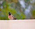 Curious bird.JPG
