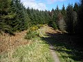 Cycle Trail in Dalbeattie Forest - geograph.org.uk - 392896.jpg