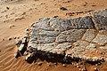 DSC02775 - Namibia 2010 Sossusvlei (32034961242).jpg