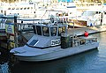 Dana Point Harbor charter boat.jpg