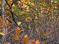 Deer-in-the-brush - West Virginia - ForestWander.jpg