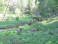 Deers - panoramio.jpg
