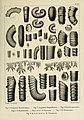 Description des mollusques fossiles qui se trouvent dans les grès verts des environs de Genève (9525369436).jpg