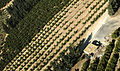 Desert farm (392246131).jpg