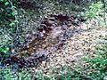 Die Blattbach Quelle.jpg