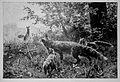 Die Gartenlaube (1889) b 497.jpg