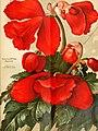 Die Gartenwelt (1917) (20912508992).jpg