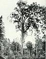 Die Pflanzenwelt Afrikas, insbesondere seiner tropischen Gebiete - Grundzge der Pflanzenverbreitung im Afrika und die Charakterpflanzen Afrikas (1910) (20940188565).jpg