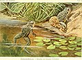 Die Reptilien und Amphibien mitteleuropas (1912) (20321496583).jpg
