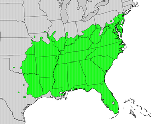Diospyros virginiana - Image: Diospyros virginiana map