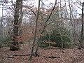 Dorridge Wood, Arden Drive B93 - geograph.org.uk - 2196844.jpg