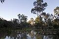 Dubbo NSW 2830, Australia - panoramio (163).jpg