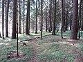 Dusetų sen., Lithuania - panoramio (119).jpg