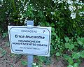 E. leucantha sign.JPG