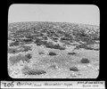 ETH-BIB-Opcina, Triest, Wachholder-Kuppe-Dia 247-00902.tif